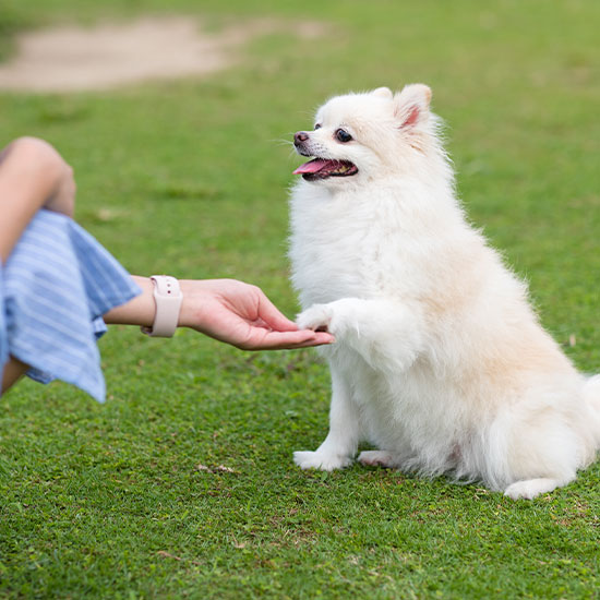 Private Consult/Individual Dog Training